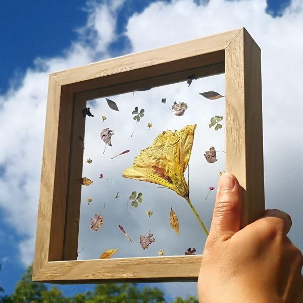 Handcrafted pressed flower artwork Whimsical Petals displaying a featured yellow pressed flower and some scattered petals in a floating frame which is being held up towards the sky that can be seen through the frame