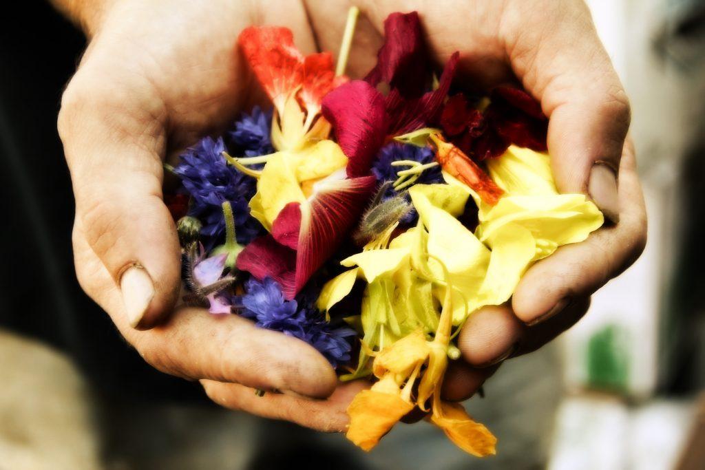 flower gifting soft